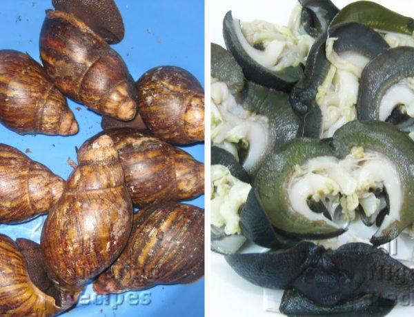 How to Clean Snails All Nigerian Recipes