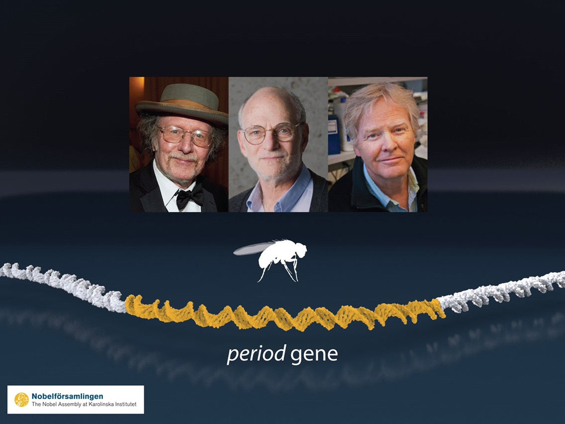 Jeffrey C. Hall,Michael Rosbash & Michael W. Young Awarded 2017 Nobel Prize In Physiology And Medicine